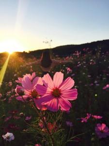 bloem vrouw zon
